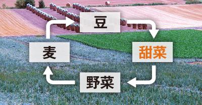 北海道の4輪作の例図