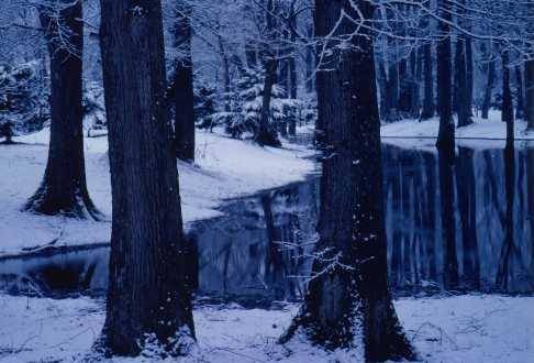 しのつ河畔林の写真2