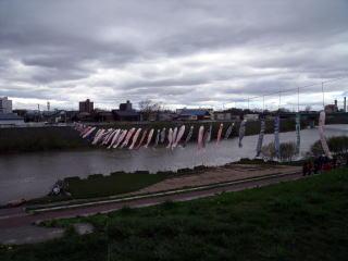 川の両端を結ぶロープに飾られた鯉のぼりの写真