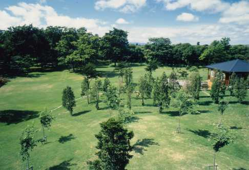 しのつ河畔林の写真1